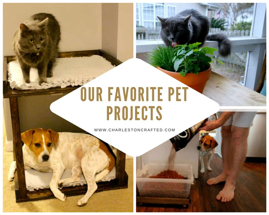 Our Favorite Pet Projects - Charleston Crafted