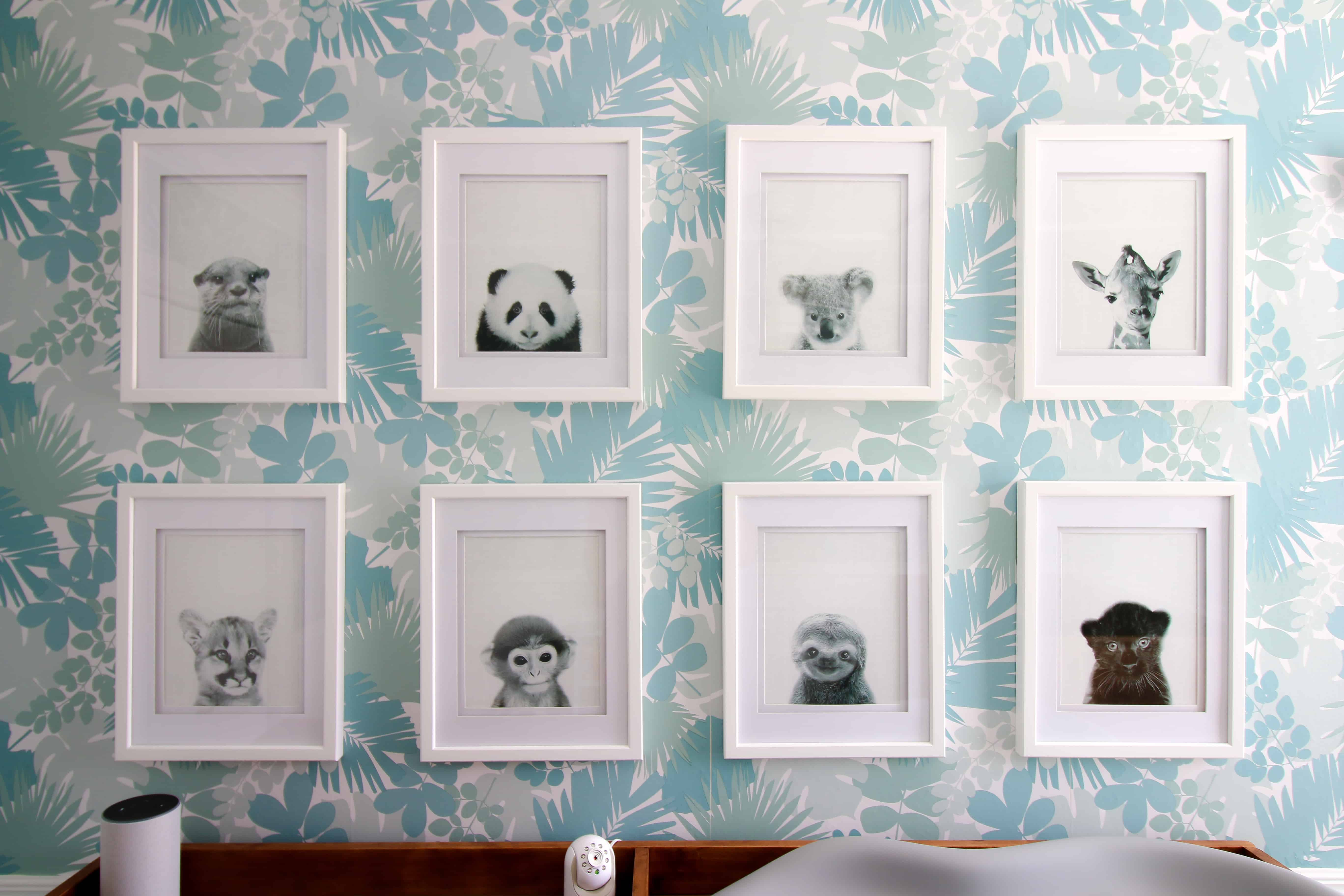 Baby Animal Gallery Wall