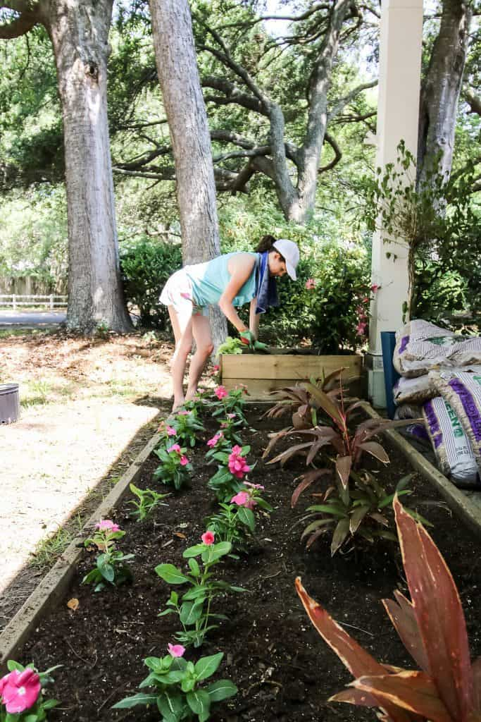 planting vinca in the front yard flower bed