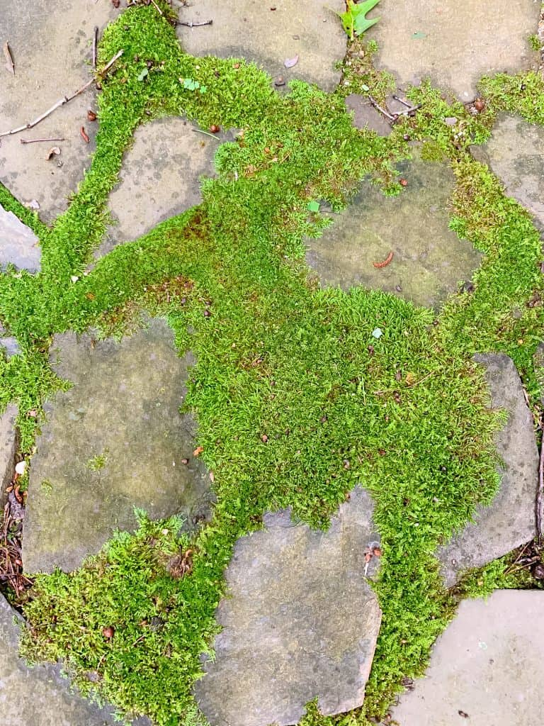 how to grow a moss path