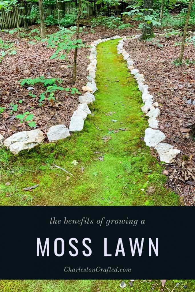 benefits of a moss lawn