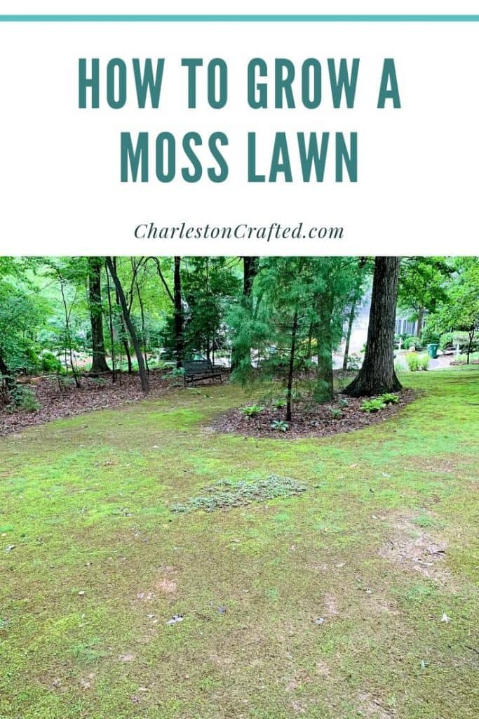how to grow a moss lawn