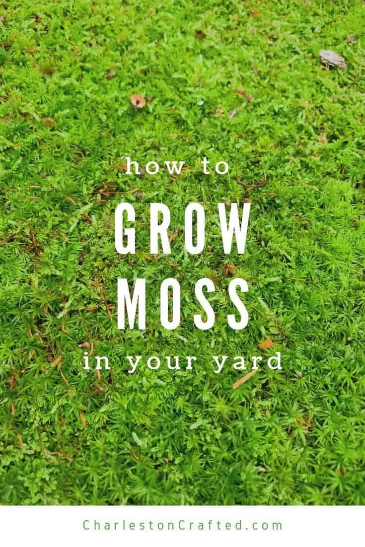 How To Grow Moss In Your Yard