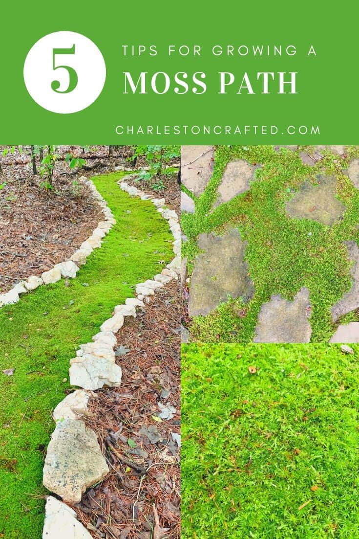 tips for growing a moss path