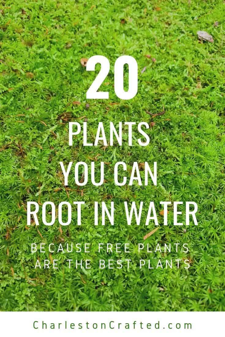 Plants that grow from cuttings in water