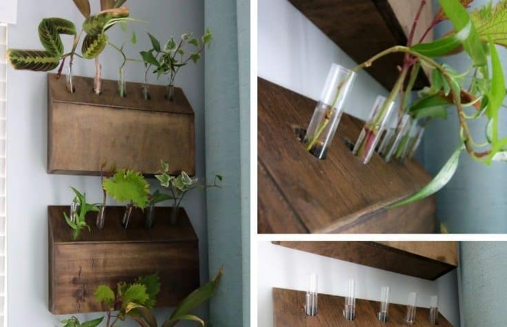 DIY wall mounted test tube planter propagation station