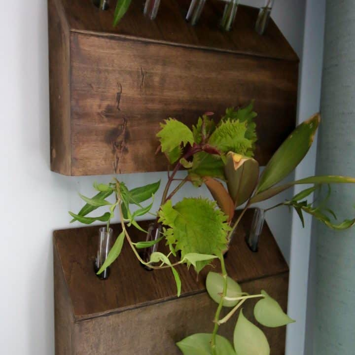 How to Build a Wall-Hanging Test Tube Planter