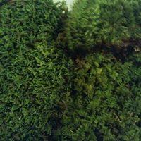 Live Moss Variety Sampler - Fern Moss, Sheet Moss, Frog Moss