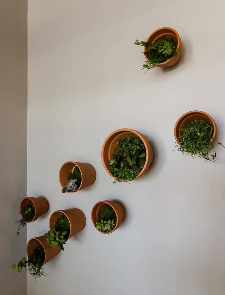 DIY Indoor Plant Wall