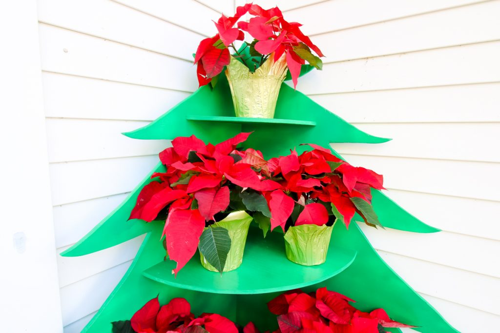 Shelves on Poinsettia Stand