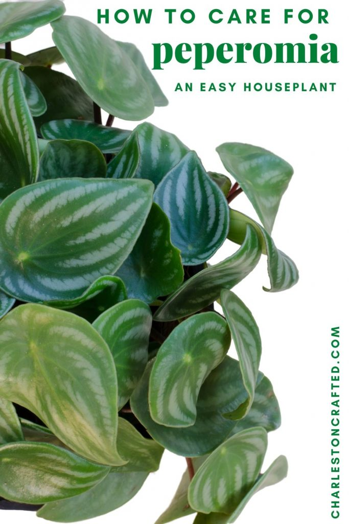 how to care for peperomia
