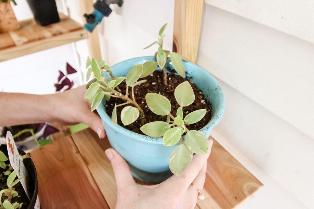 Rotating Houseplants
