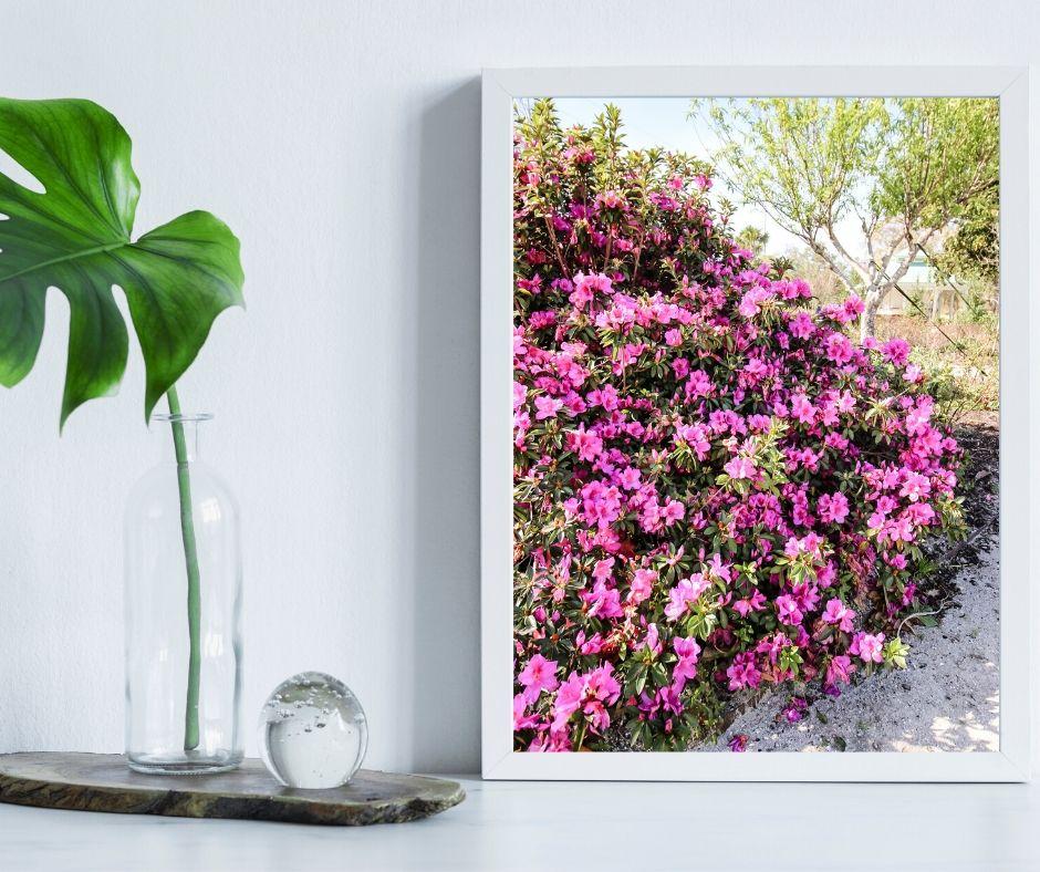 FREE Printable Spring Azalea Photography