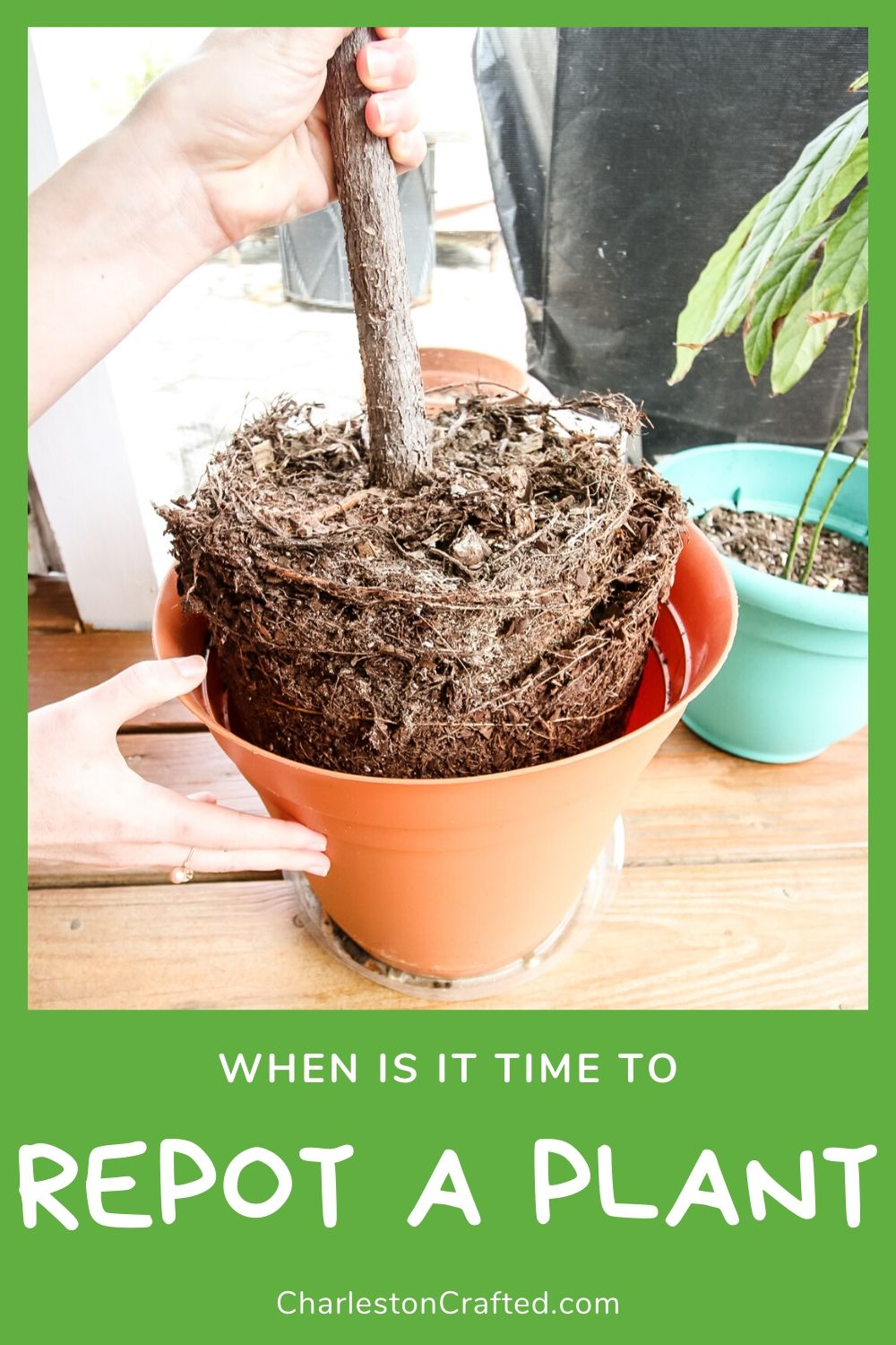 when is it time to repot a plant