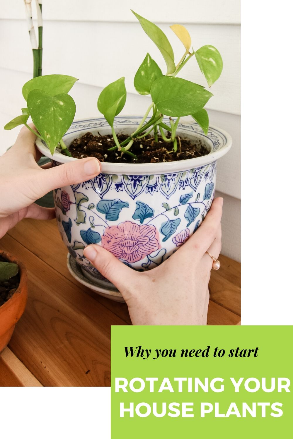 why you need to start rotating your houseplants
