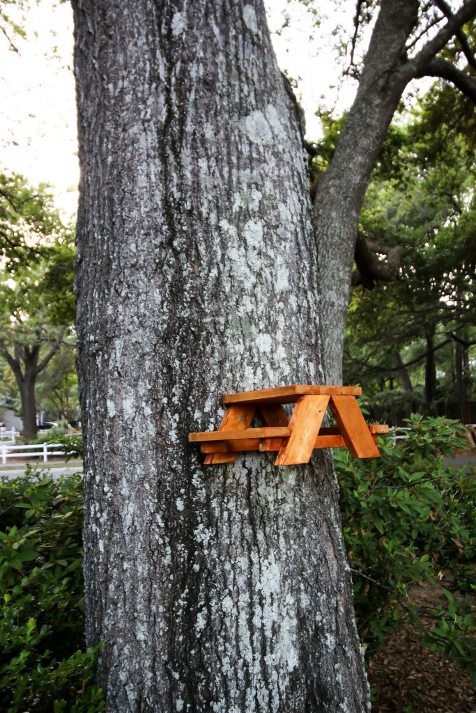 How to make a squirrel picnic table