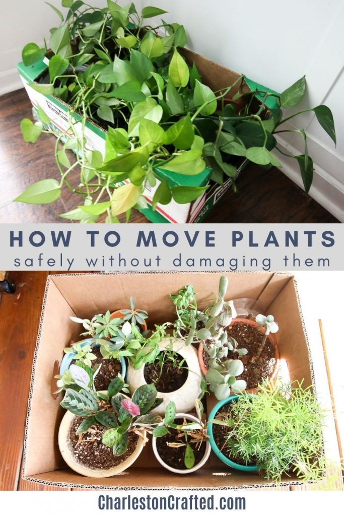 how to move plants safely without damaging them