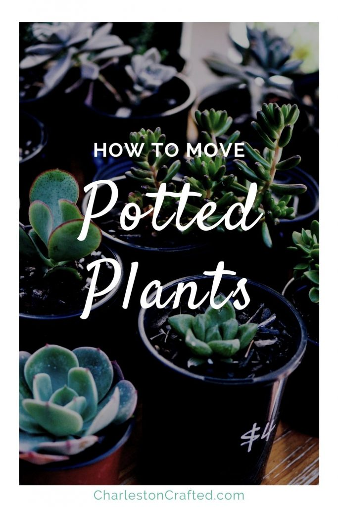 how to move potted plants (1)