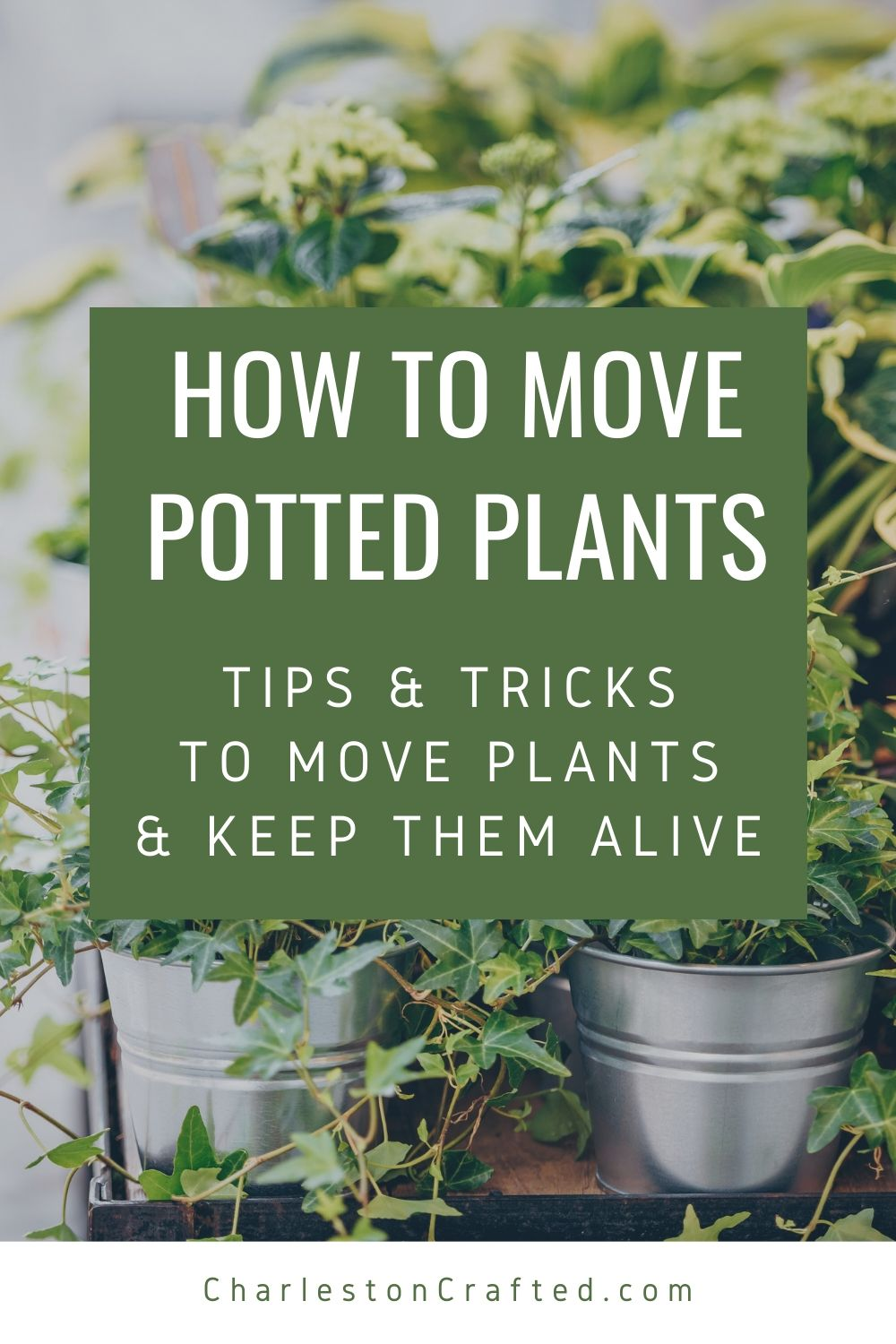 how to move potted plants