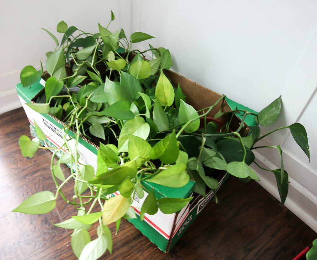 how to move houseplants