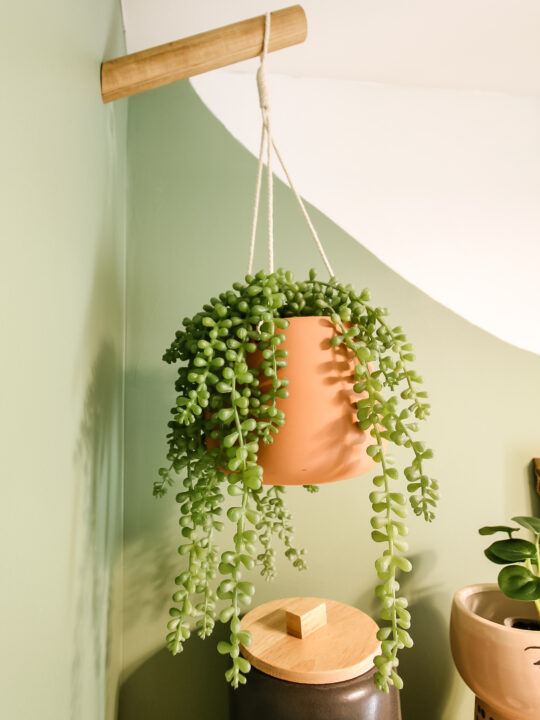 Plants hanging from plant hooks