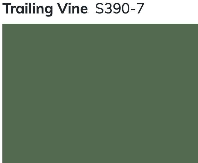 Trailing Vine by Behr