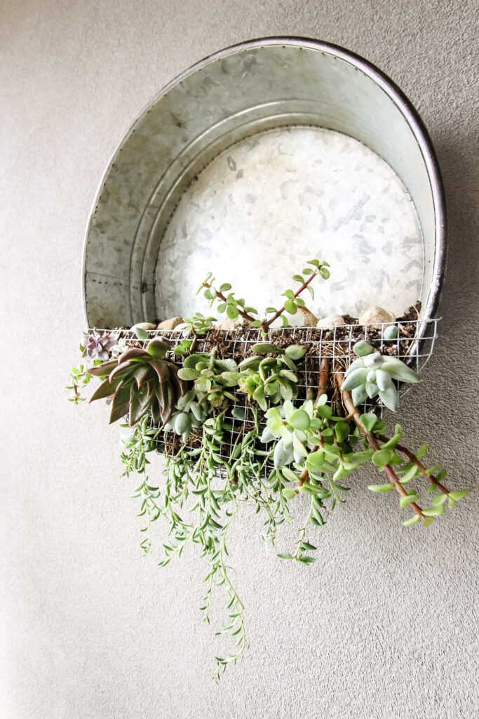 Galvanized metal bucket turned into a vertical succulent garden