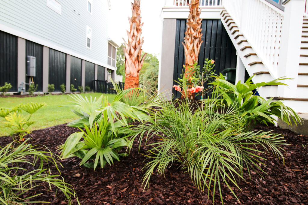 Tropical plants with palm trees
