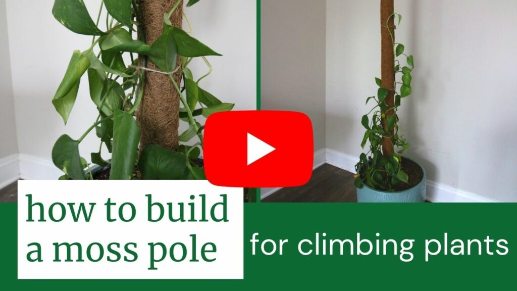 how to build a moss pole thumbnail blog