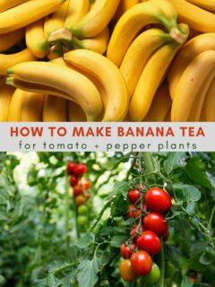 how to make banana tea