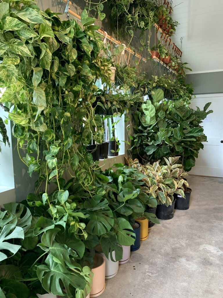 Large house plants in plant house charleston