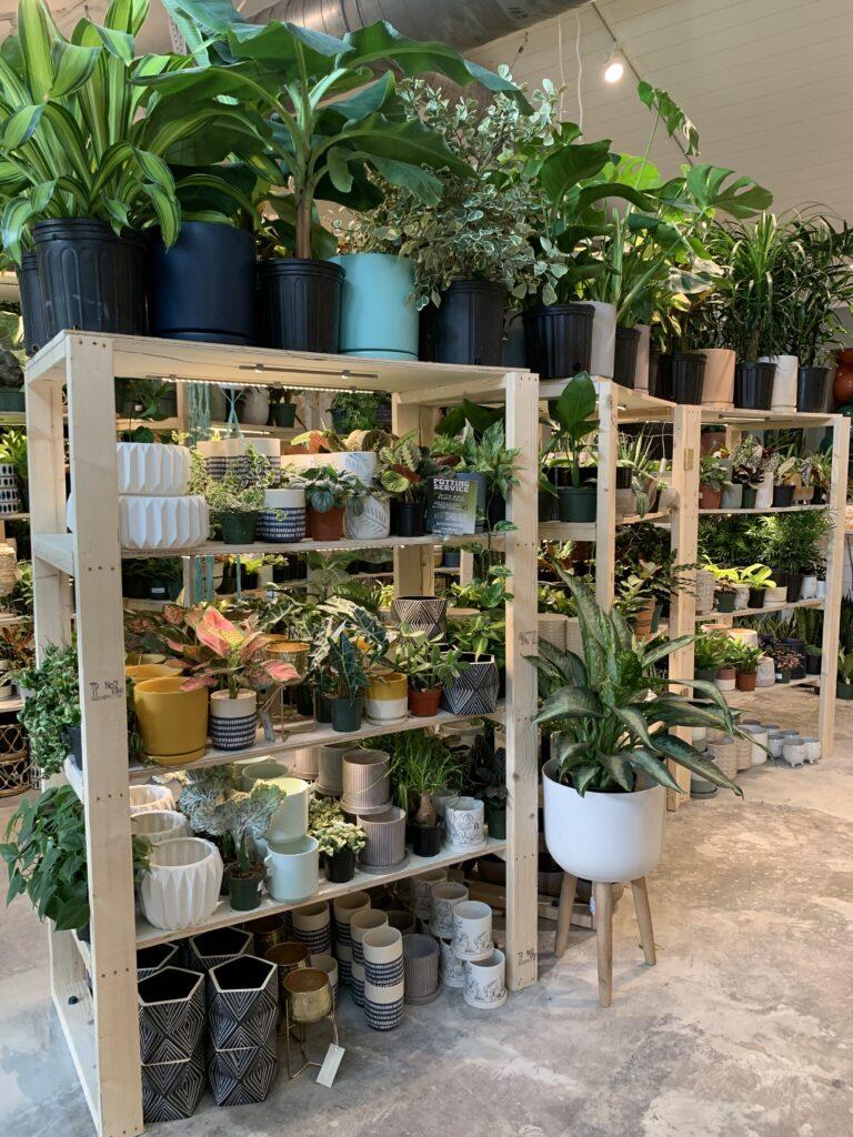 plant racks at plant house charleston