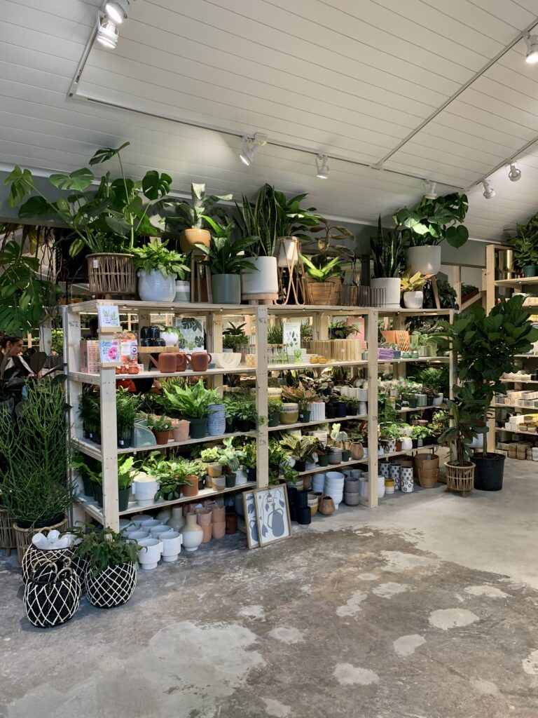 racks of plants for sale in plant house charleston